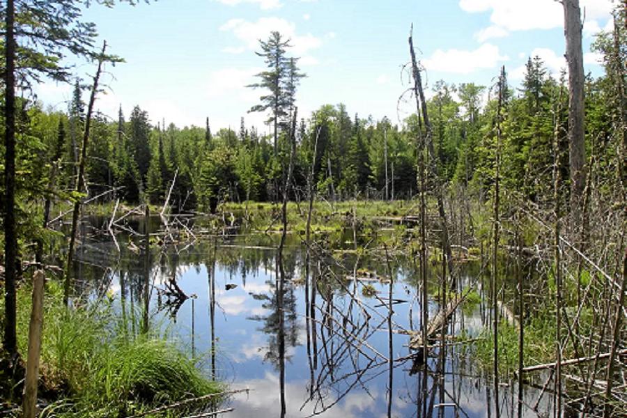 Webinaire sur les milieux humides et hydriques