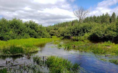 Conservation des plans régionaux des milieux humides et hydriques: un forum régional le 20 mai